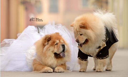 """宠物说将开启""""宠爱奇缘""""史上最大宠物集体婚礼"""